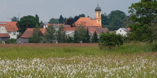 Schmutttertal bei Wollishausen mit Wollgras